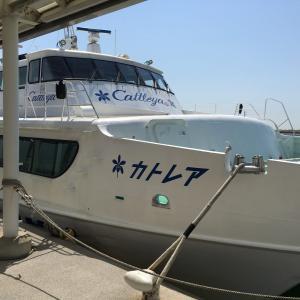 海の世界は厳しい:小型船舶操縦免許