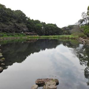 引地川の源流『泉の森』へ