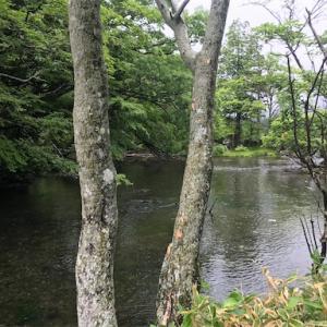 2020.7.15 栃木県釣り遠征1日目〜奥日光湯川&湯ノ湖