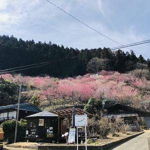 紅梅と福寿草