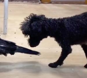 相棒犬 [partner dog]