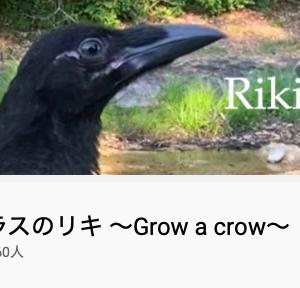 YouTuberカラス [YouTuber Crow]