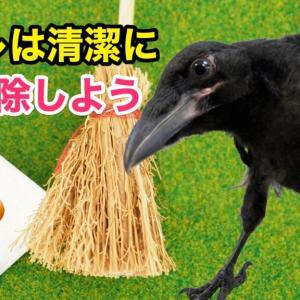 カラスのトイレ [The Crow Toilet]