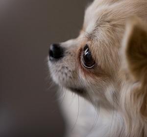 [プロトリマーが教える]犬の美容室を選ぶならココをチェック!