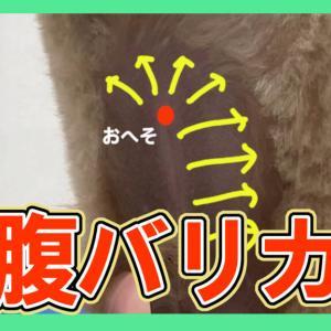【お腹バリカン】犬の持ち方〜男の子〜