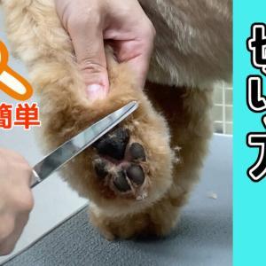 【足回りの切り方】一般犬種