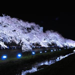 調布・野川の桜ライトアップを観に行った時の話【東京/2019】