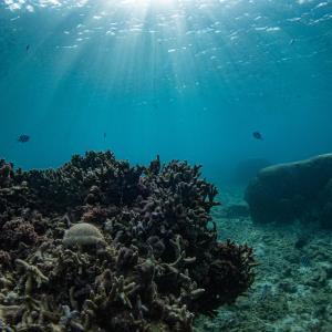 沖縄南部ポイント 大度海岸で体験ダイビング