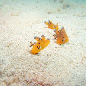 沖縄北部ビーチでピカチュウウミウシと初対面♡