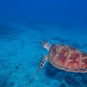 沖縄北部のパルプンテポイント!イシキリで調査ダイビング