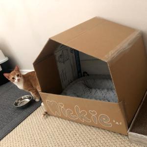 Mickie(猫)が我が家に慣れるまで@テメキュラ、CA