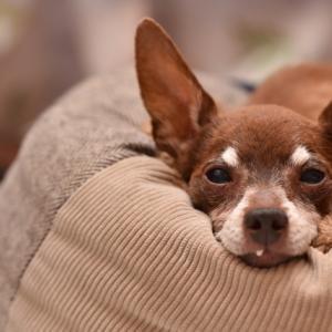 高齢犬へのポリシー