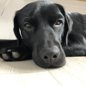 嫁の独り言〜犬のために〜