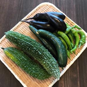 お裾分けの夏野菜