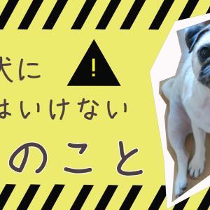【ソレダメ】小型犬にしてはいけない3つのこと