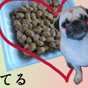 犬は納豆を食べたらダメ?栄養・アレルギー・与え方を守ればOK!