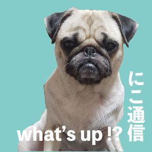 犬Youtubeで流行ったトイレットペーパーチャレンジを我が家流にしてみた
