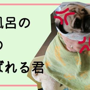 お風呂の後、犬にドライヤーは本当に必要なのか?