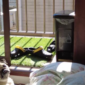 犬に日光浴は必要ない?効果的な日光浴時間・場所を解説します