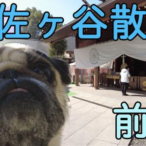 犬と東京散歩を楽しもう!阿佐ヶ谷神明宮で犬連れ参拝【犬連れ参拝の注意点】