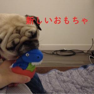 ペットのコジマで購入!犬用恐竜おもちゃGIGWI EGGで遊んでみた!