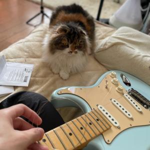 ギター断捨離!