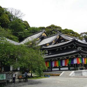 鎌倉へ⑤長谷寺 あじさい路