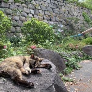 猫とシャボン玉|カメラ撮影は難しい。。。