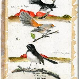 鳥 博物画3