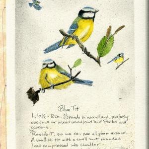 鳥 博物画2