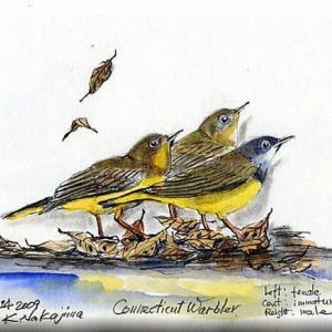 鳥 博物画18