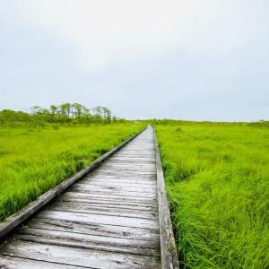 【北海道6月】釧路湿原とご当地グルメを堪能する!〜新婚旅行3日目〜