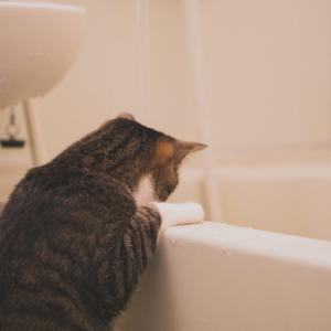 実は簡単な風呂釜の掃除。徹底洗浄で内部に潜む菌を撃退!