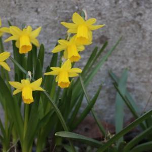✿庭の小さな花たち✿