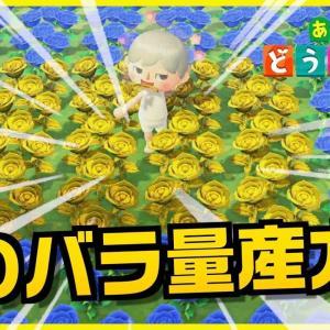 【あつ森】初心者必見!金のバラと青いバラを咲かせるための交配を全部教えます!【あつまれどうぶつの森】