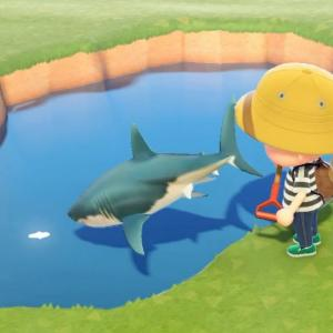 サメを池に捨てたらやばかった