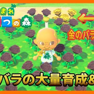 【あつ森】簡単な黒いバラの大量育成&交配の方法 金のジョウロを使わずに金のバラは咲きます【あつまれどうぶつの森】