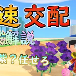【あつもり裏技】最速で花を交配する方法!青も紫も任せろ【あつまれどうぶつの森】