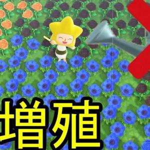 【あつ森】『花がかってに増える』【裏技】