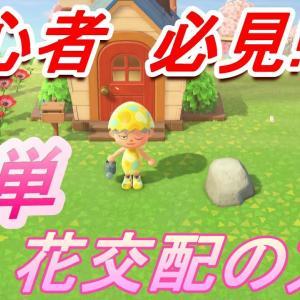 【あつ森 攻略】初心者必見! 簡単すぎる!! 花交配のやり方説明します!