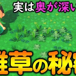 【あつ森】『雑草の交配』って知ってますか?雑草マイスターが教えるレベル2の育て方講座!【あつまれ どうぶつの森】【ぽんすけ】