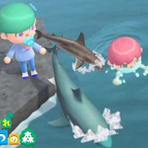友達が泳いでる所に、サメを逃してみたらやばかった【あつ森】
