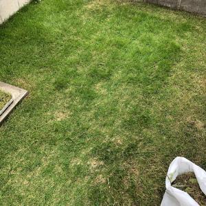 芝生 際刈りからの…中