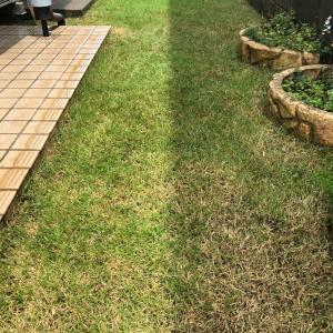 芝生 1ヶ月ぶりの手入れ