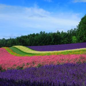 【富良野市】ファーム富田のラベンダー畑♪2020