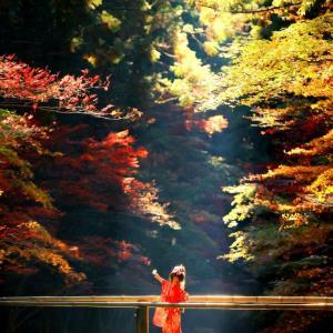 静岡県で人気の紅葉スポット!小國神社に行ってきました!