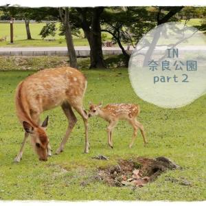 可愛い小鹿がたくさん♪また奈良公園に行ってきました~*