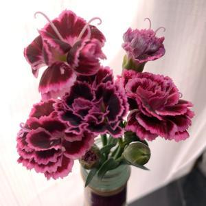 【写真】2回目の収穫♫【お花】