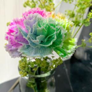 【写真】お花(雨・室内)