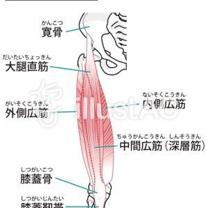 脚の鍛え方
